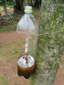 Eco-friendly insect trap designed and built by the students of Escuela Agricola